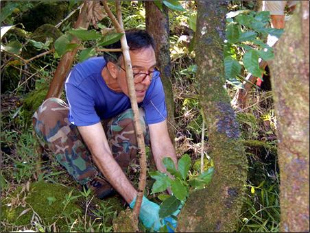 Sierra-Club-Volunteer-Project-Oahu